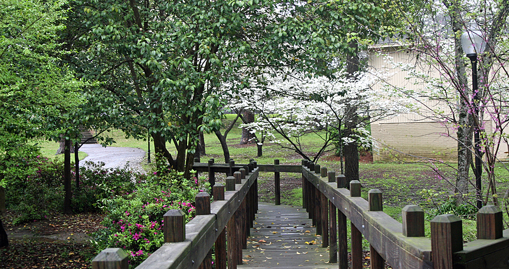 Bridge on the Green opening to spring flowering trees